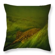 A Freshwater Stingray Swims In A Meadow Throw Pillow