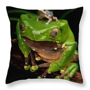 A Frog Phylomedusa Bicolor Perched Throw Pillow