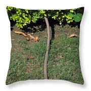 A Garden Water Pipe Emerging From Within A Hedge Throw Pillow