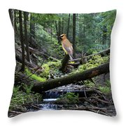 A Giant Cedar Waxwing On Mt Spokane Throw Pillow