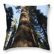A Giant Redwood In The Mariposa Grove Throw Pillow