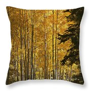 A Golden Trail Throw Pillow