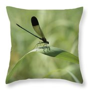 A Graceful Dragonfly Sitting On A Blade Throw Pillow