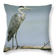 A Graceful Gray Heron Standing On A Log Throw Pillow