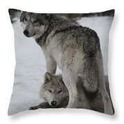 A Gray Wolf, Canis Lupus, Stands Throw Pillow