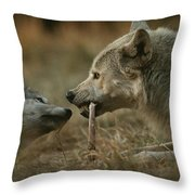A Gray Wolf Pup, Canis Lupus, Begs An Throw Pillow