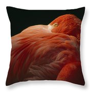 A Greater Flamingo With Its Head Throw Pillow