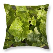 A Green Leafy Vegetable Plant After Watering In Bright Sunrise Throw Pillow