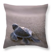 A Green Sea Turtle Hatchling Races Throw Pillow