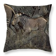 A Grevys Zebra With Young In Samburu Throw Pillow