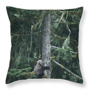 A Grizzly Bear Clings To A Fir Tree Throw Pillow