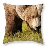 A Grizzly Bear Ursus Arctos Horribilis Throw Pillow