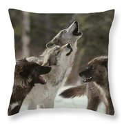 A Group Of Gray Wolves, Canis Lupus Throw Pillow