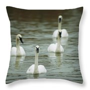A Group Of Swans Swimming On A County Throw Pillow