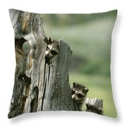 A Group Of Young Racoons Peer Throw Pillow