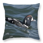 A Harlequin Duck Surfing Throw Pillow