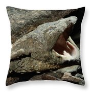 A Hellbender Salamander In Its Rocky Throw Pillow