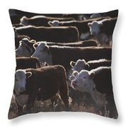 A Herd Of Cattle On The Wyoming Range Throw Pillow