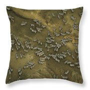 A Herd Of Zebras In The Mara River Throw Pillow
