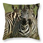A Herd Of Zebras Standing Alert Throw Pillow