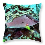 A Hogfish Swimming Above A Coral Reef Throw Pillow