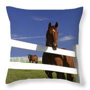A Horse Peers Over A Fence Throw Pillow