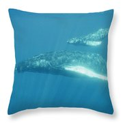 A Humpback Mother Swims With Her Calf Throw Pillow