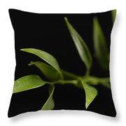 A Italian Ruscus Ruscus Aculeatus Throw Pillow