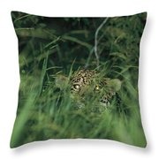 A Jaguar Peeks Out From The Foliage Throw Pillow