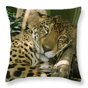 A Jaguar Rests On The Jungle Floor Throw Pillow