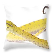 A Juvenile Green Tree Python Sits Alert Throw Pillow