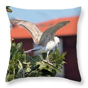 A Juvenile Herring Gull Throw Pillow
