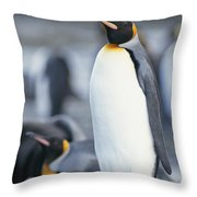A King Penguin Stands On Pebbled Ground Throw Pillow