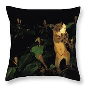 A Kinkajou Drinks Deeply Of Balsa Throw Pillow