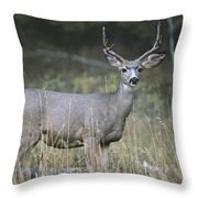 A Large Antlered White-tailed Deer Throw Pillow