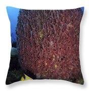 A Large Barrel Sponge With Queen Throw Pillow