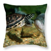 A Large Mouthed Bass And A Chicken Turtle In Aquarium In Cape Co Throw Pillow