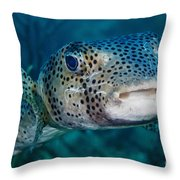 A Large Spotted Pufferfish Throw Pillow