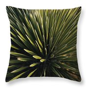 A Lechuguilla Plant In The Desert Throw Pillow