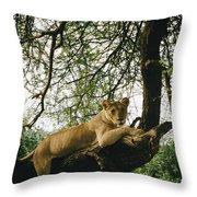 A Lion Panthera Leo Relaxes On A Tree Throw Pillow