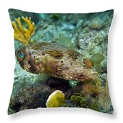 A Long-spined Porcupinefish, Key Largo Throw Pillow by Terry Moore
