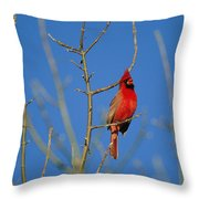 A Male Cardinal Sings In A Suburban Throw Pillow