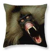 A Male Gelada Baboon Bares His Fangs Throw Pillow
