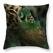 A Male Leopard Dozes Throw Pillow