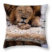 A Male Lion Panthera Leo Sleeps Throw Pillow