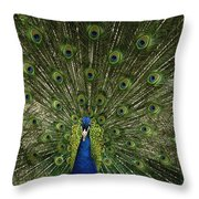 A Male Peacock Displays His Feathers Throw Pillow