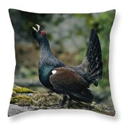 A Male Western Capercaillie Tetrao Throw Pillow