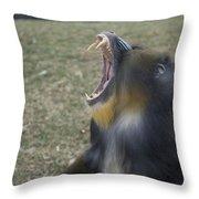 A Mandrill Mandrillus Sphinx Throw Pillow