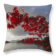A Maple Tree In Fall Foliage Frames Throw Pillow