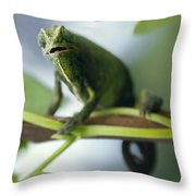 A Montane Side-striped Chameleon Throw Pillow